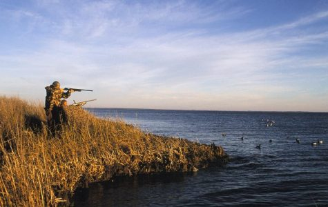 All About Waterfowl Hunting