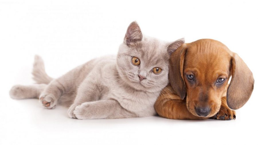 How to Take Care of a Dog or Cat