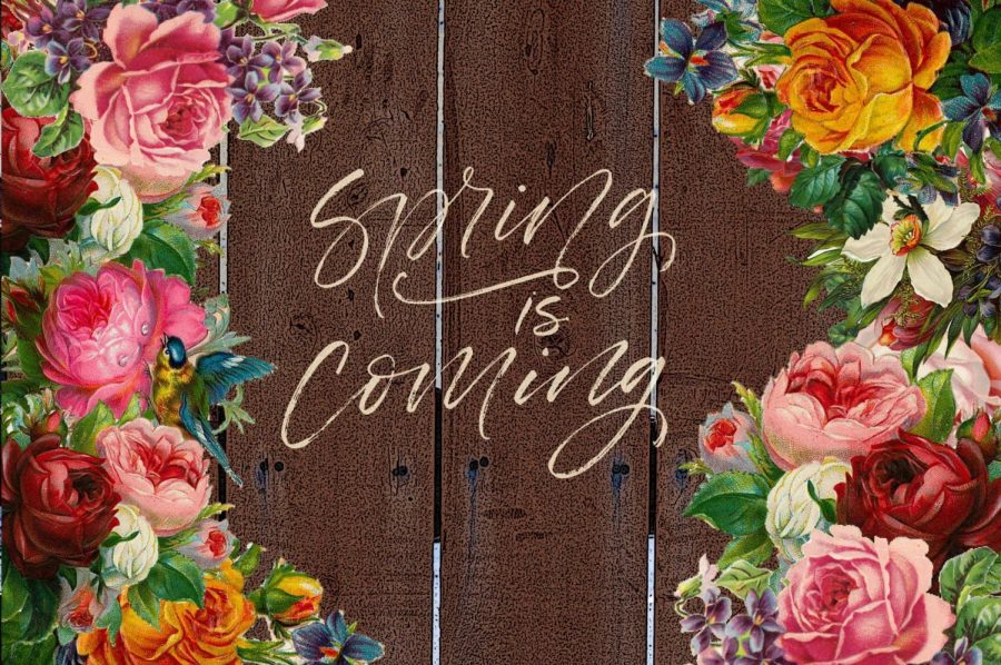 Top 5 Spring Things to Look Forward To